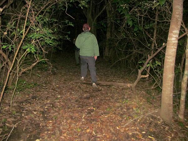 Monteverde night walk
