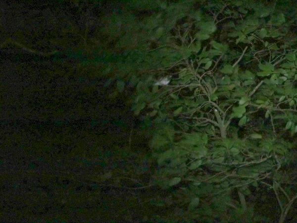 Wren Costa Rica night walk