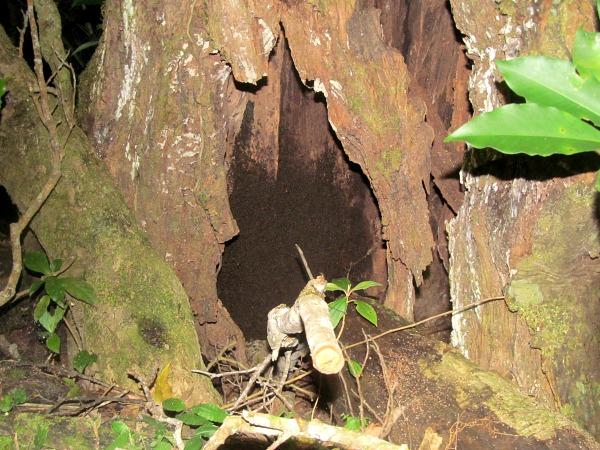 Costa Rica Children's Eternal rainforest hike