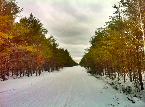 Pine forest snowmobile trail