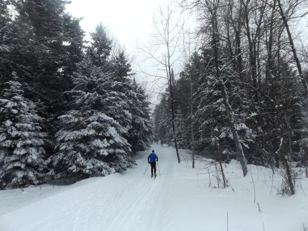 Gatineau Loppet Canada woods