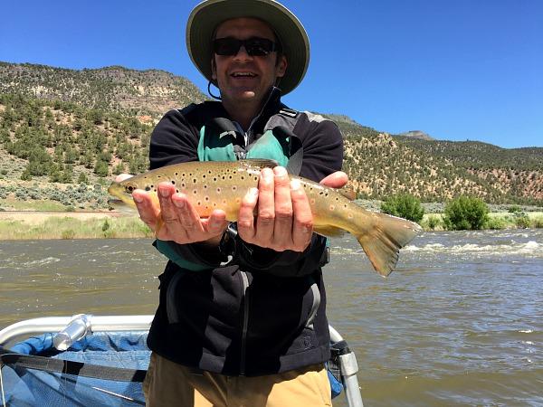 Brown trout Colorado River