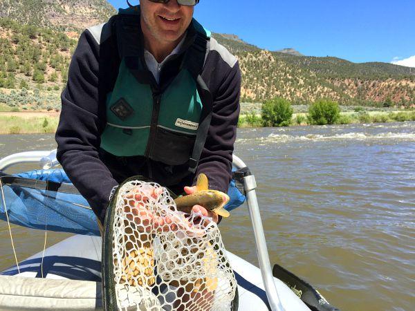 Brown trout Colorado