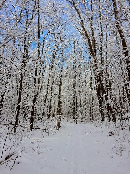 Beaver Brook cross country ski trails