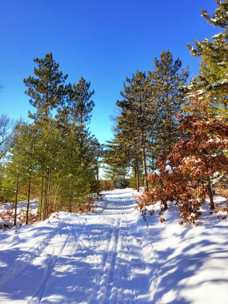 Black River State Forest Wildcat Trails -