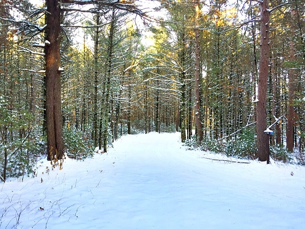Black River State Forest Wildcat Trails