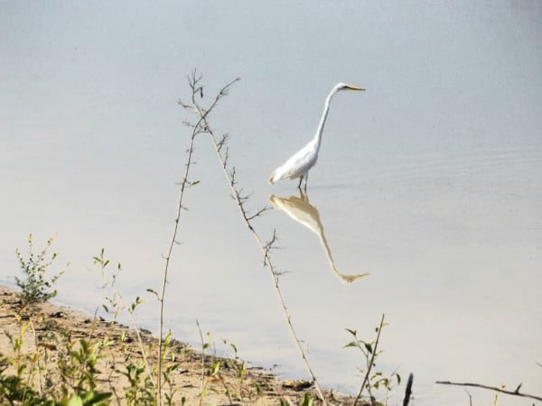 Egret Colombia