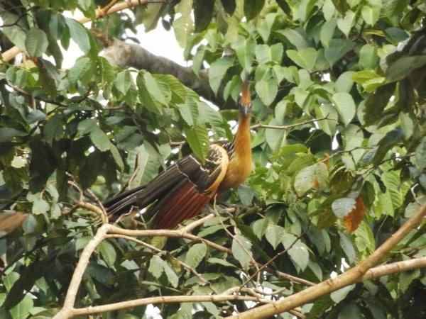 Colombia Amazon birds