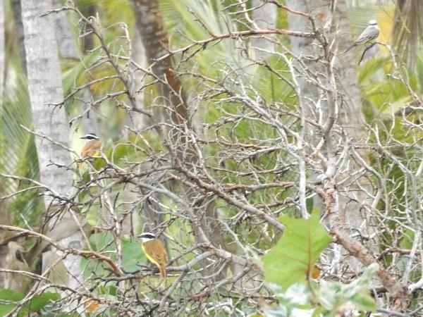 Colombia bird photo essay