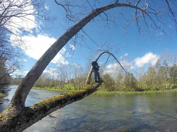 South Holston River fishing