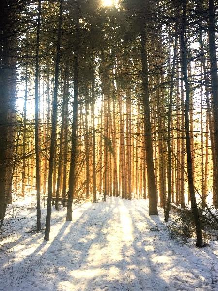 Devil's Lake State Park golden forest