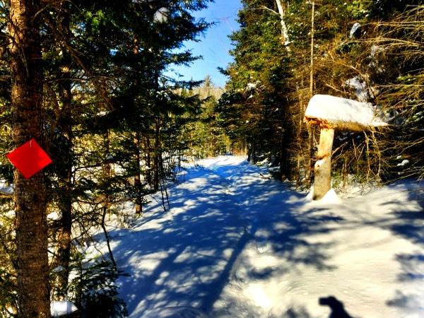 Minocqua Winter Park snowshoeing