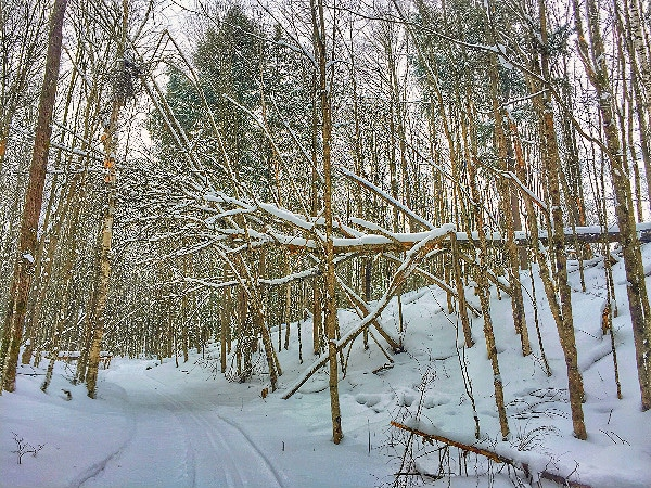 Sylvania Wilderness cross-country skiing
