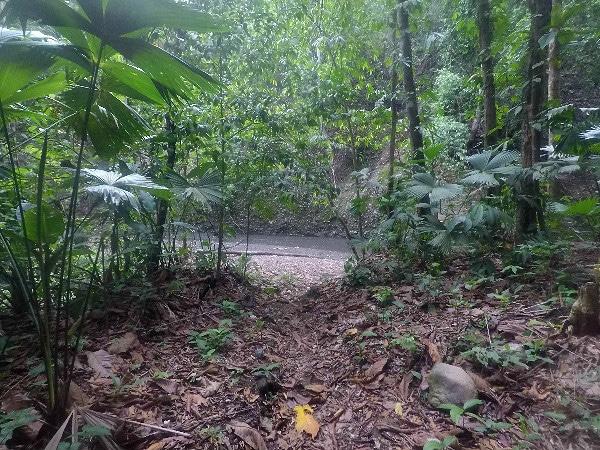Bolita Hostel trail