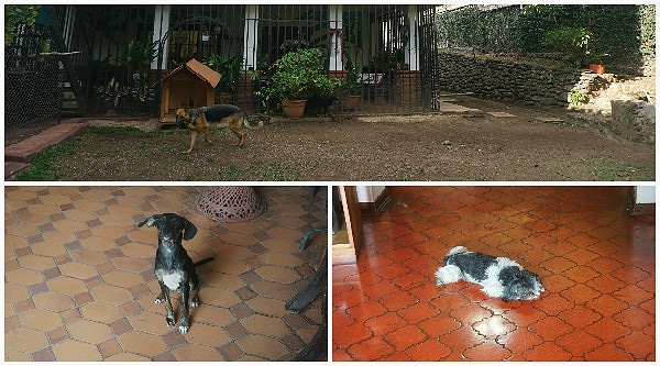 Cariari Bed & Breakfast dogs