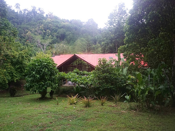 Osa Rainforest Rentals