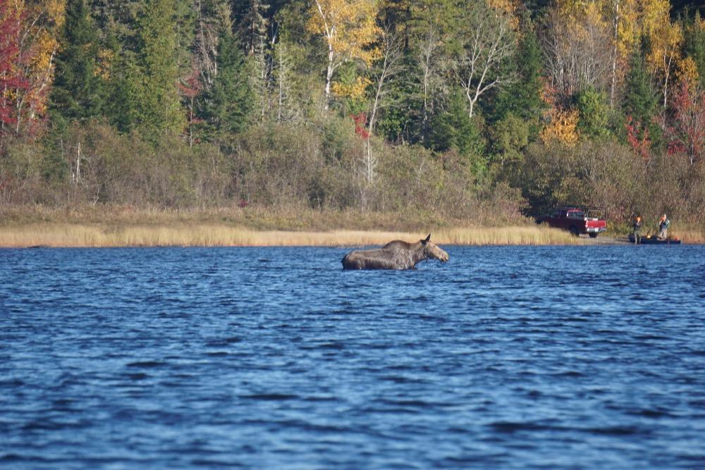 Moose Allagash River