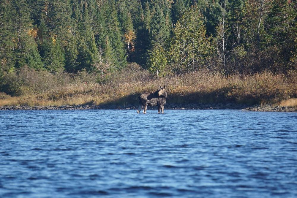 Moose river Maine
