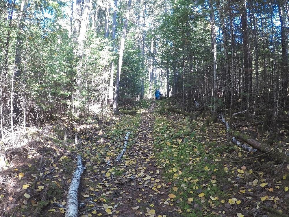 Fire Tower Trail hike