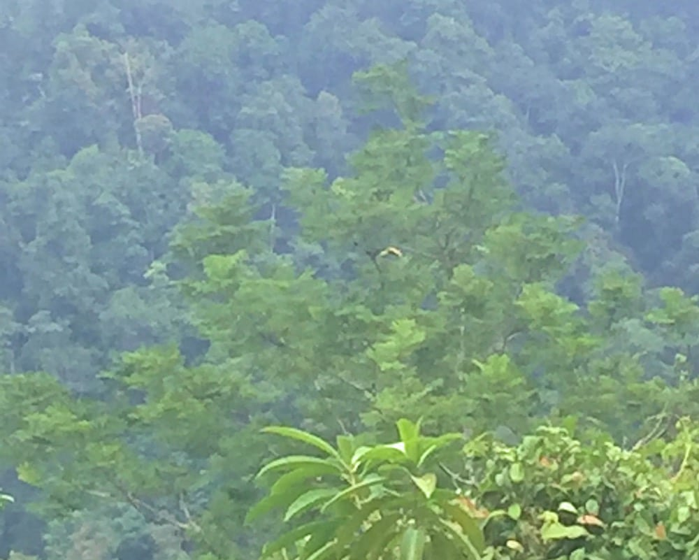 Toucan flying Bolita