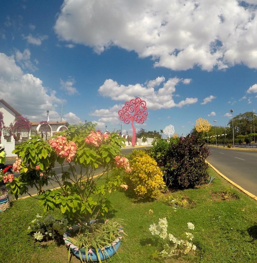 Managua trees of life