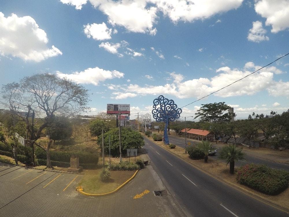 Managua fake plastic trees