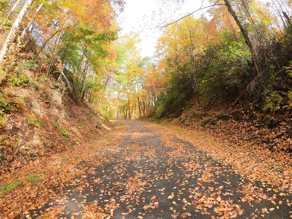 Appalachian Trail Great Smoky Mountains