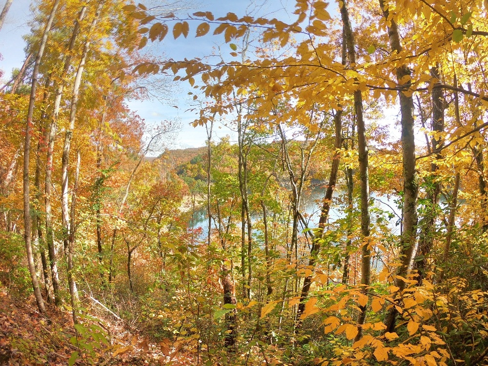 Smoky Mountains Lakeshore Trail