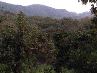 Karnala Bird Sanctuary