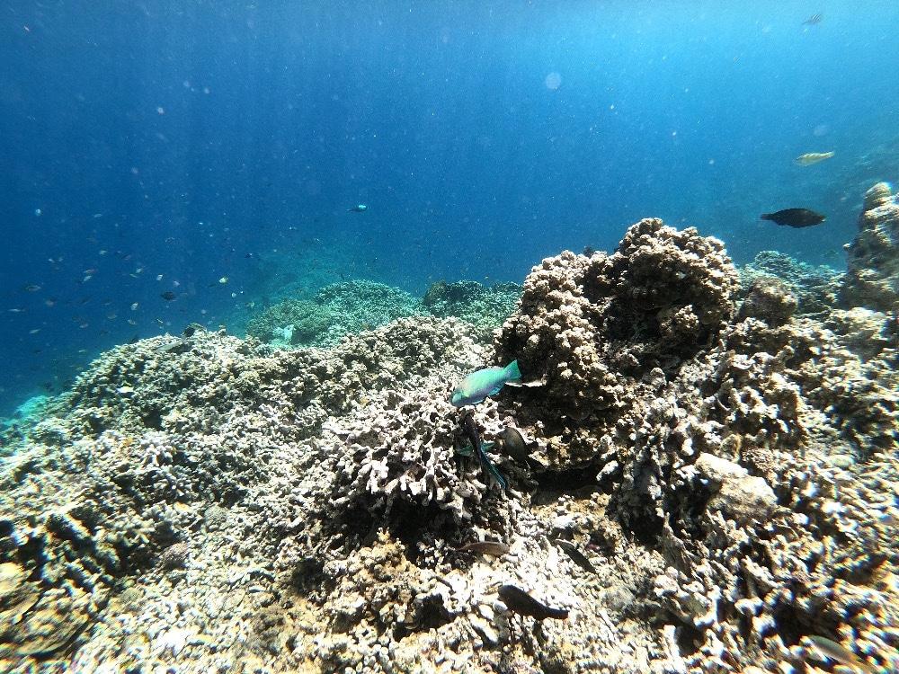 Menjangan Island West Bali
