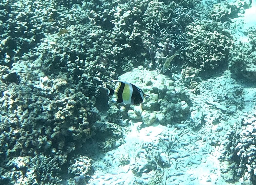 Tropical fish Indonesia