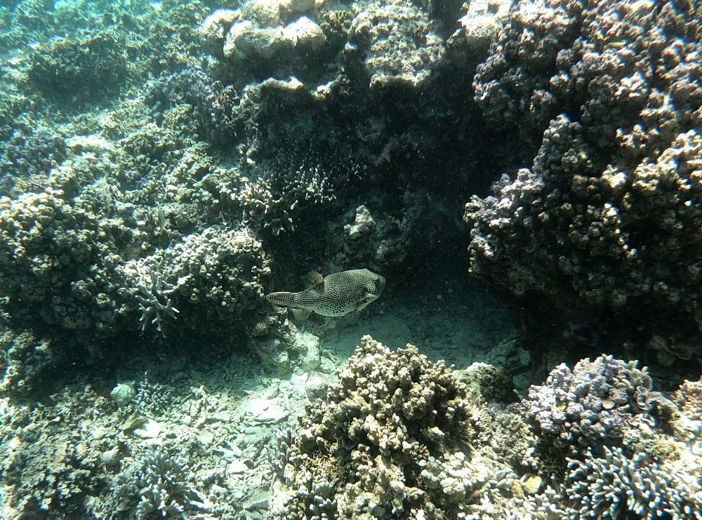 big fish Indonesia