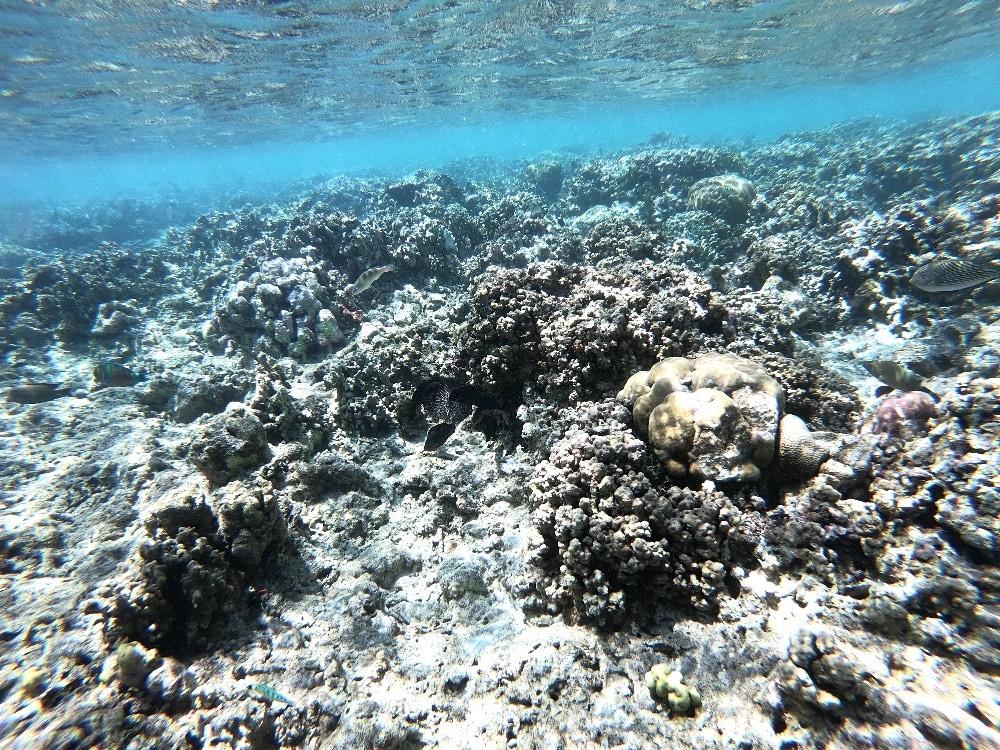 Indonesia snorkeling