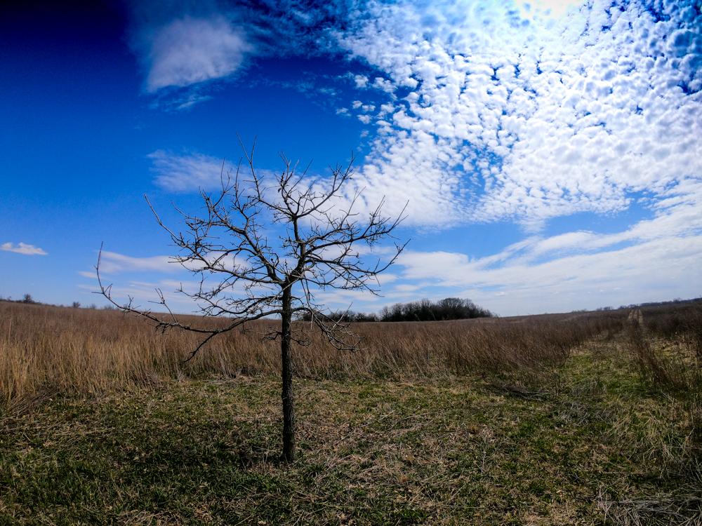 One tree Midewin National Tallgrass Prairie