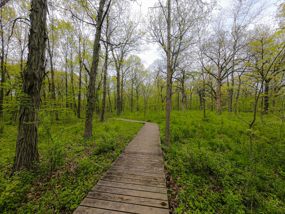 Ryerson Woods hiking trails