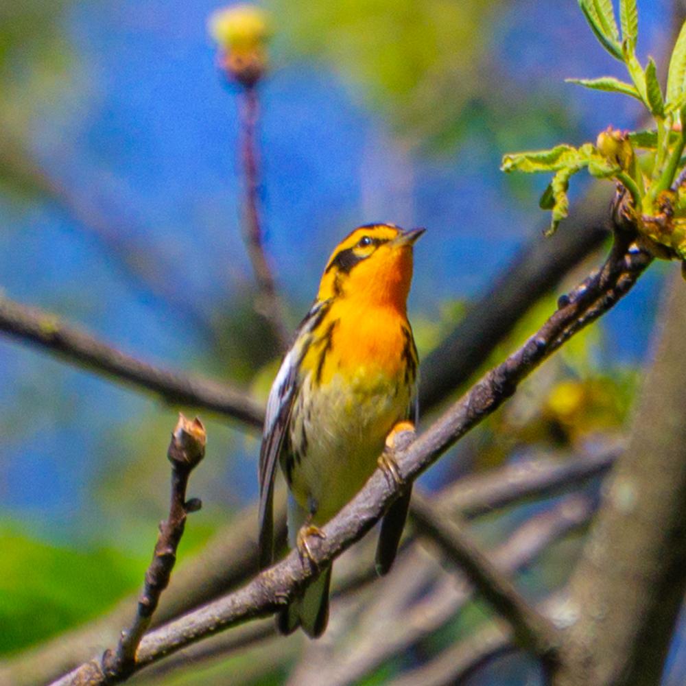 Ryerson Woods Illinois birds