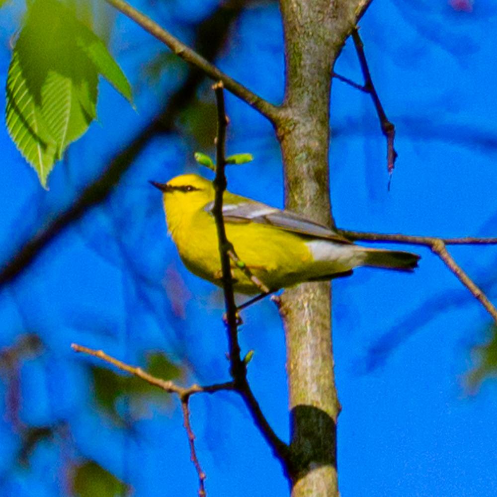 spring bird migration Ryerson Woods