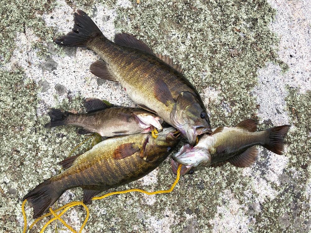 Bass fishing Minnesota