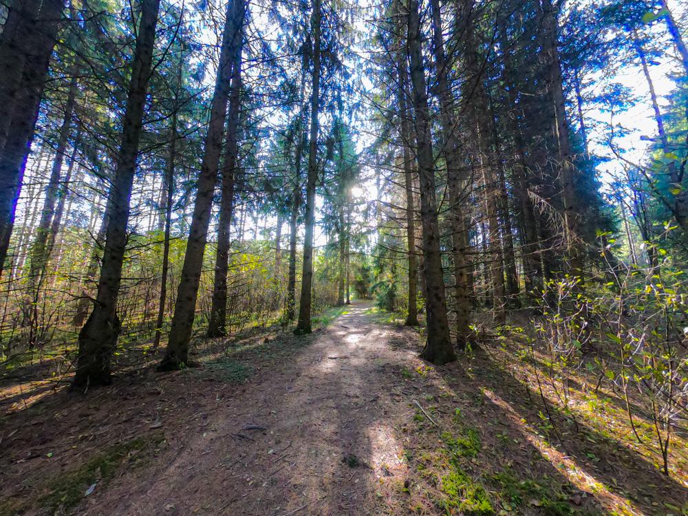 Wisconsin pine forest