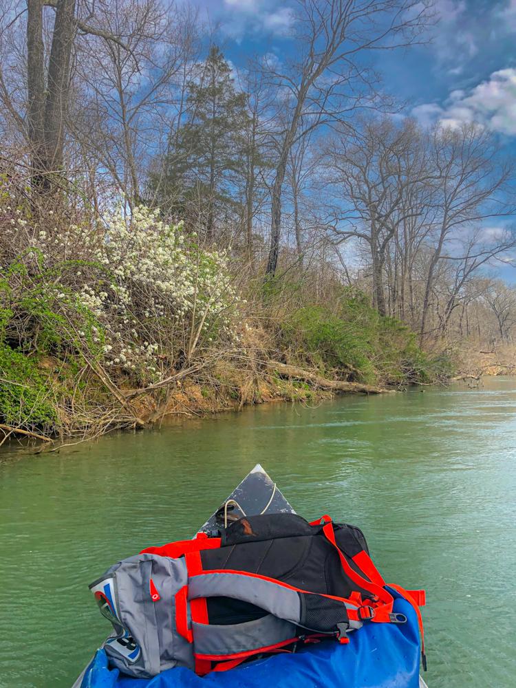 Missouri spring dogwood