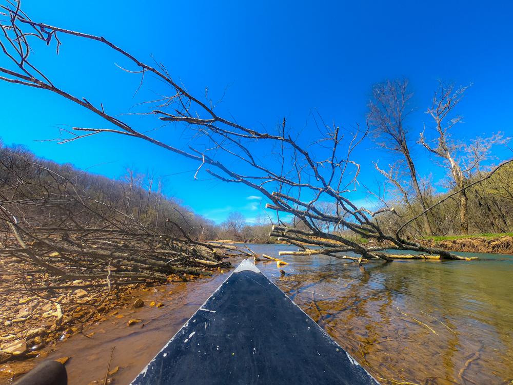 River logjam
