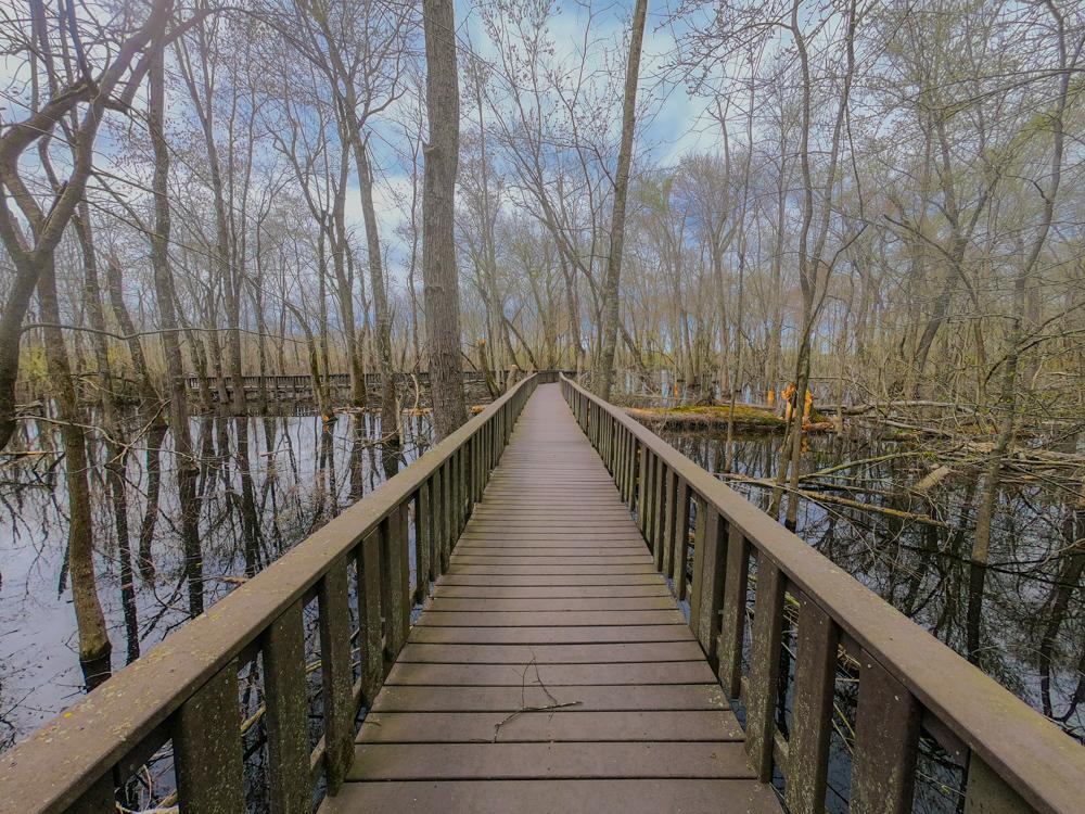 Mingo swampwalk