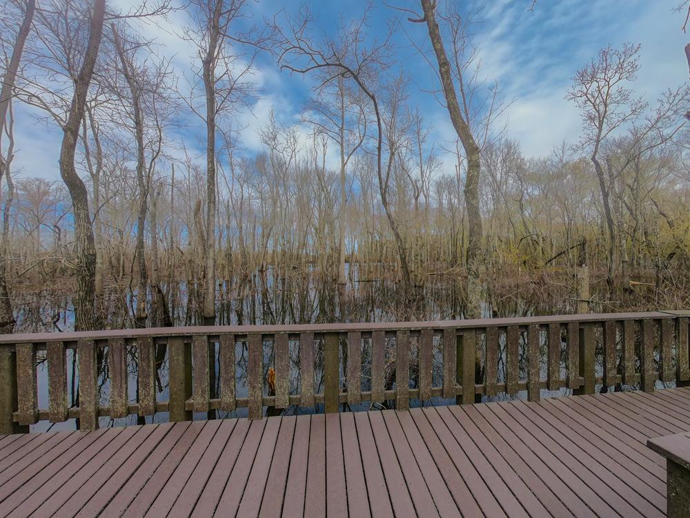 boardwalk swamp hike