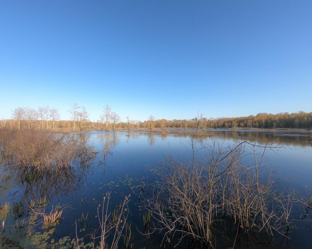 Mingo NWR cypress swamp