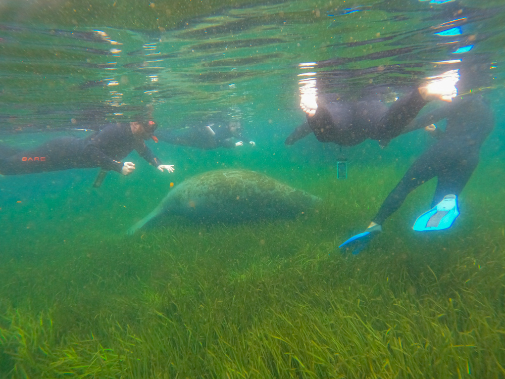 Manatee and people