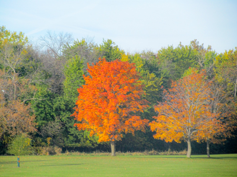 Chicago fall colors